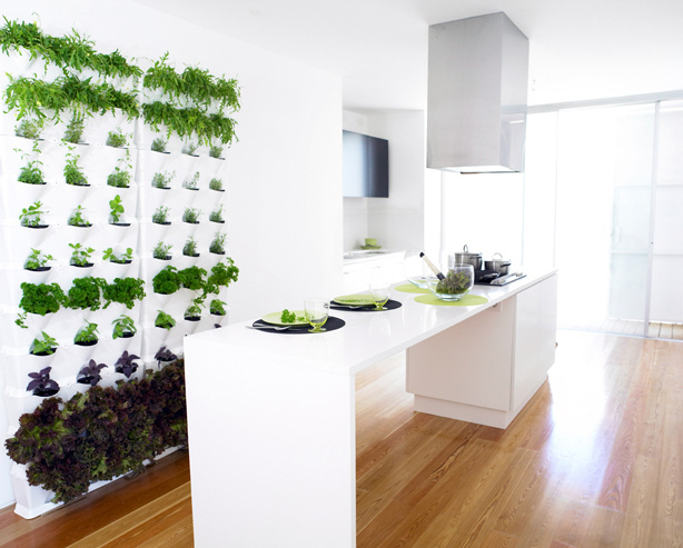 How to Start a Balcony Garden